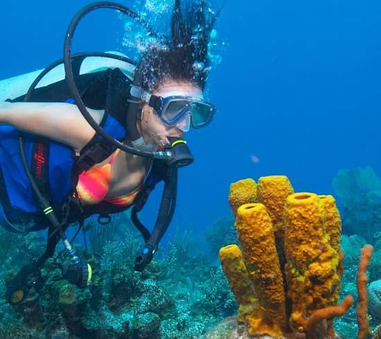 diving-sponge-lg1.jpg