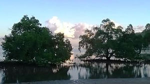 mangroves-compressed.jpg