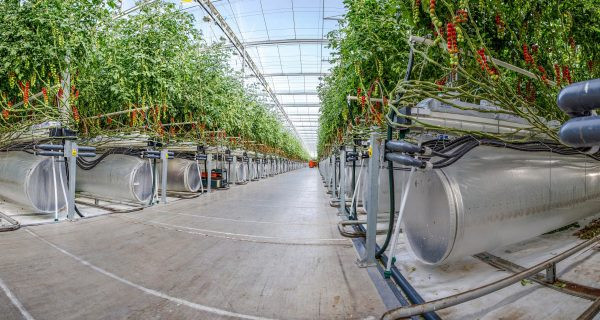 A picture of a Pure Harvest greenhouse in the UAE from GulfBusiness.com.
