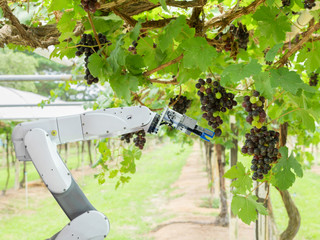 We're in the news. Alpha-Brown's research on robotic picking for agriculture. Thanks to ever