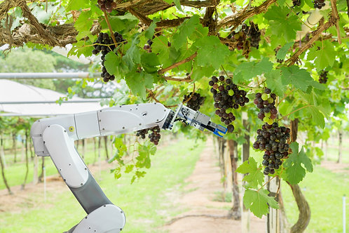 Agricultural Robotic Harvesting Solutions