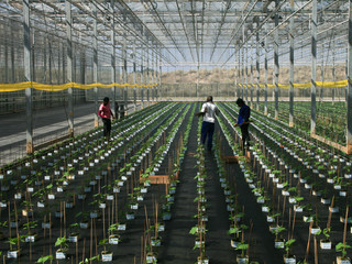 How the Internet of things in Agriculture could impact the African economies