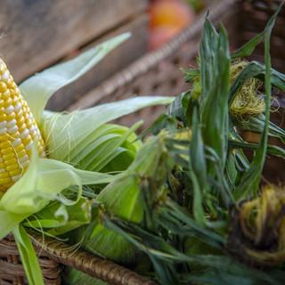 corn-3779299_1920.jpg