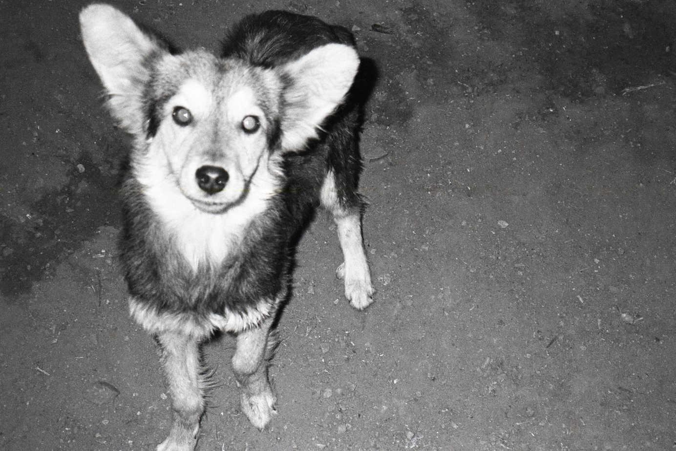 No apretar la trompa de un perrito ni darle tamal