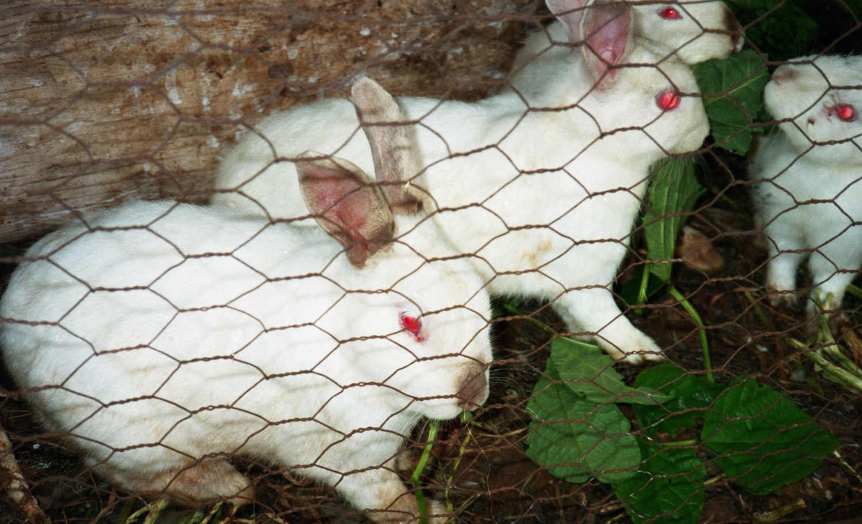 Hueso de conejo