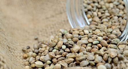 Seeds Background - Beegens Beans.jpg