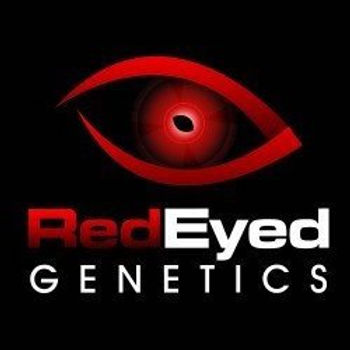 redeyed-genetics-copy.jpg
