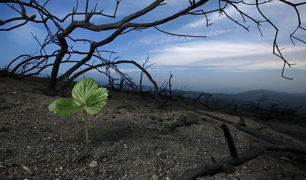 Bushfire regen.jpg