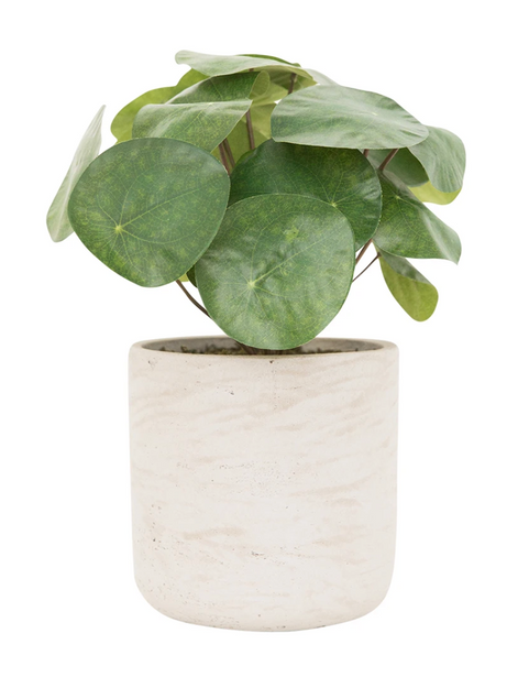 Faux Potted Pancake Plant