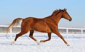Pferd frei.jpg