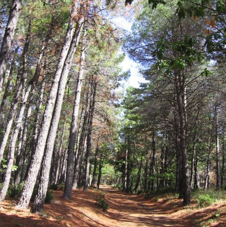 Pollino National Park trails