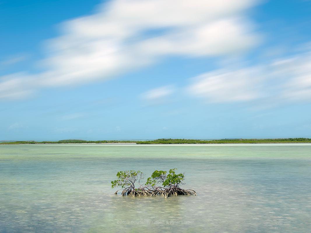 Florida Keys Mangrove