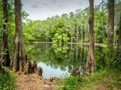 Shingle Creek 2
