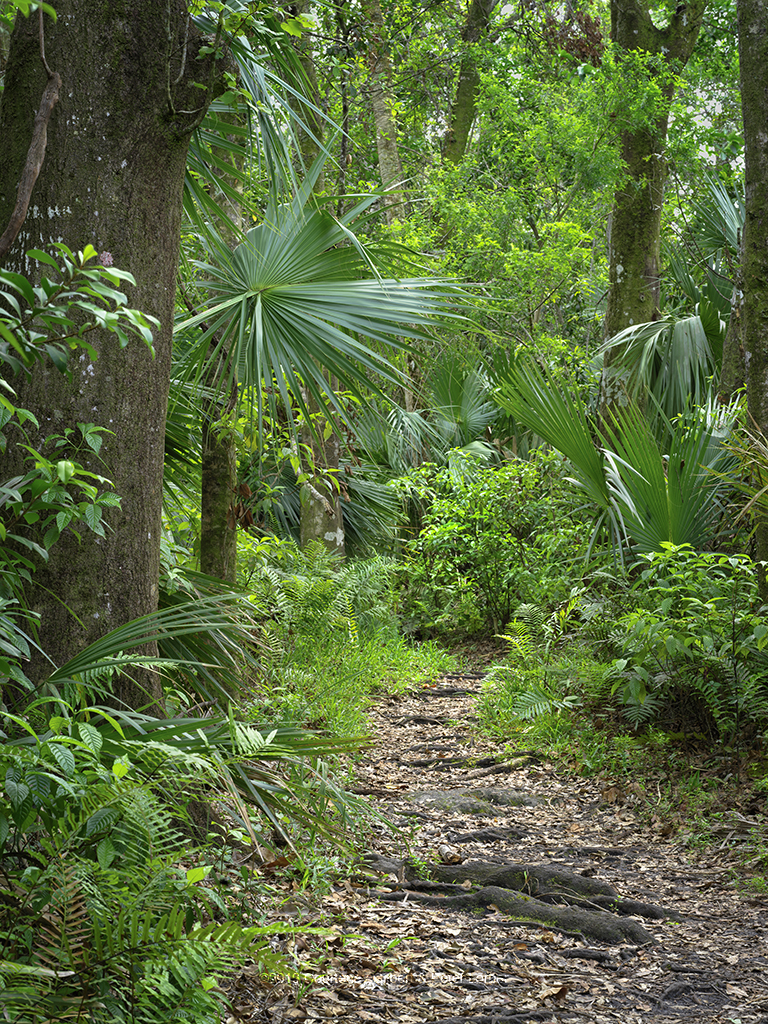 Fern Forest Path 1