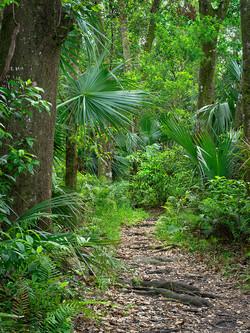 Fern Forest Path