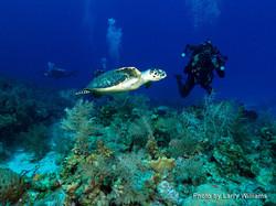 Grand Cayman 2011_100.jpg