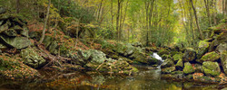 Little Prong Middle River