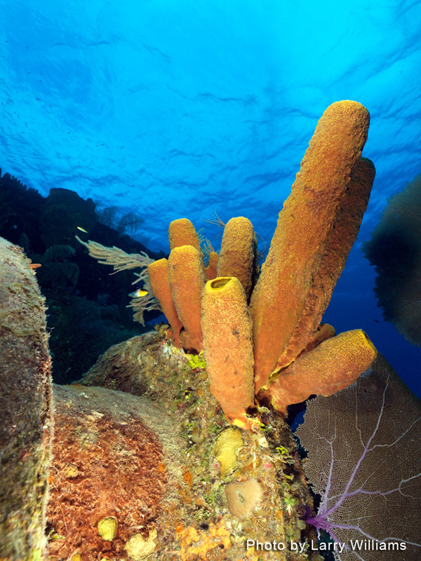 Grand Cayman 2011_006.jpg