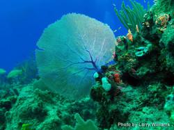 Grand Cayman 2011_012.jpg