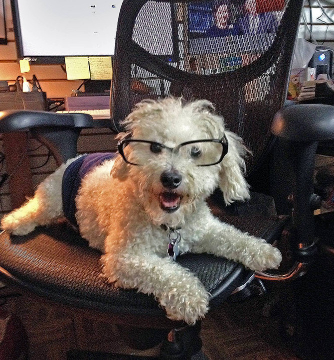 Pic of the Day! - Take Your Dog To Work Day