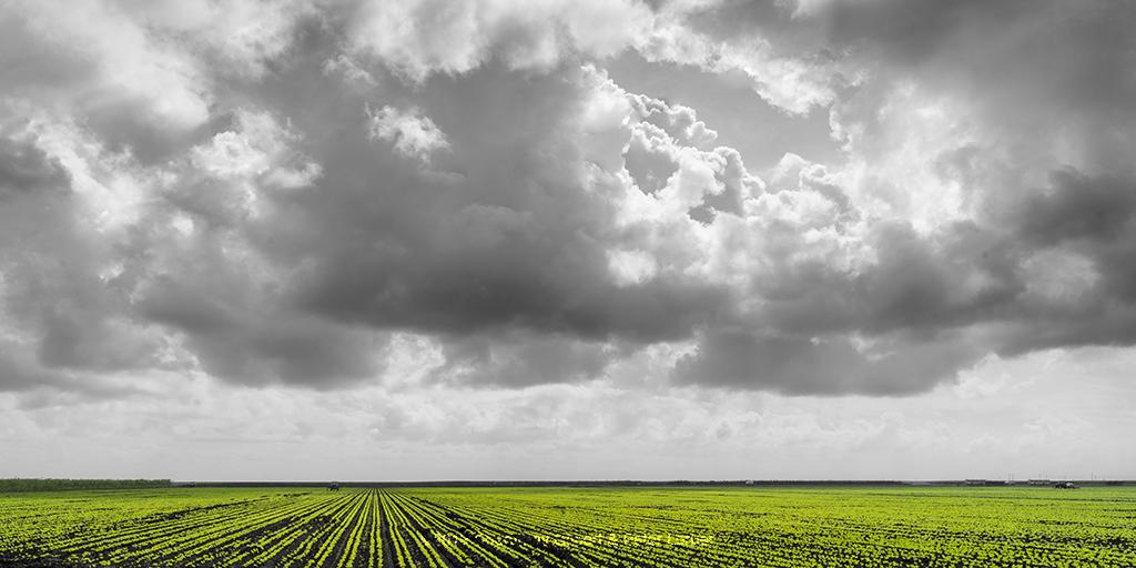 Florida Harvest