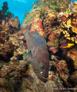 Grand Cayman 2011_009.jpg