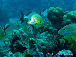 Grand Cayman 2011_011.jpg