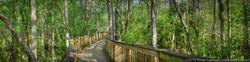 Everglades Boardwalk