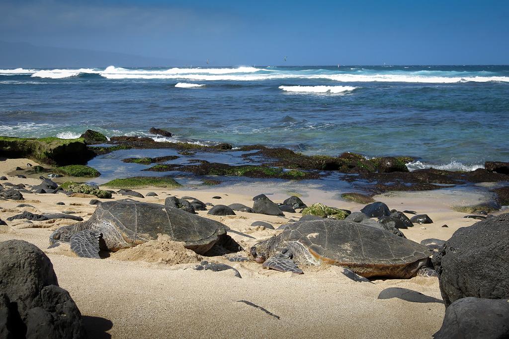 Maui_006.jpg