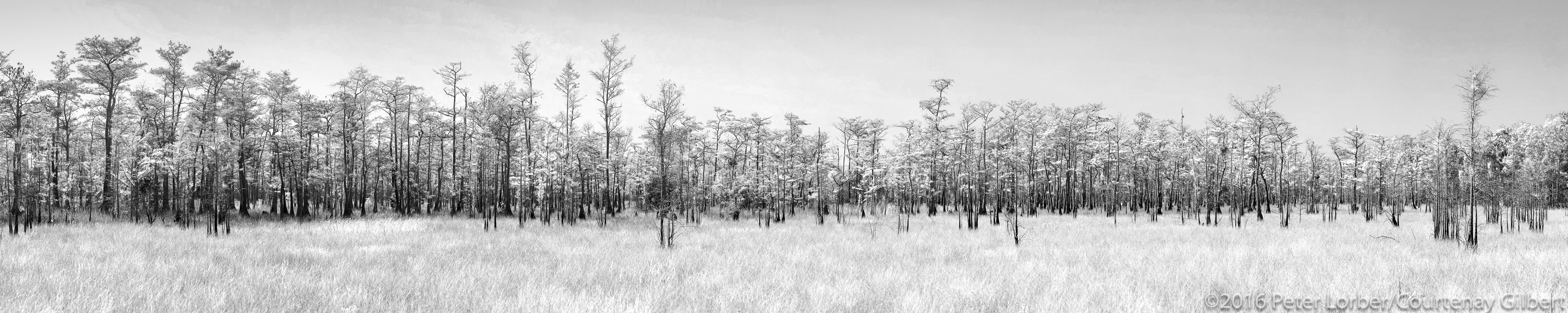 Everglades Trees