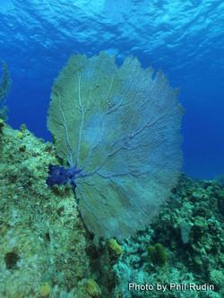 Grand Cayman 2011_048.jpg