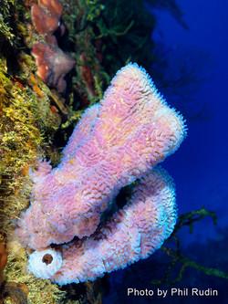 Grand Cayman 2011_075.jpg