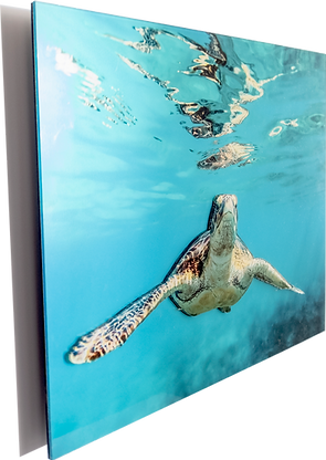 acrylic-cutout-wall-mount-3d-turtle-angl