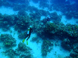 Grand Cayman 2011_047.jpg