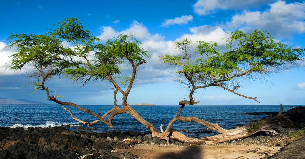 Maui_031.jpg