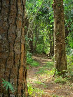 Fern Forest Path 2