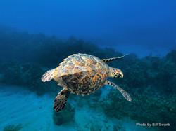Grand Cayman 2011_008.jpg