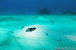 Grand Cayman 2011_068.jpg