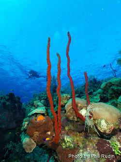 Grand Cayman 2011_038.jpg