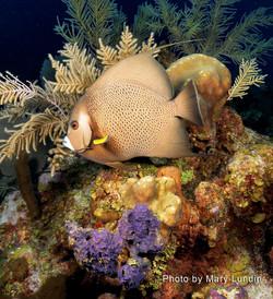 Grand Cayman 2011_125.jpg