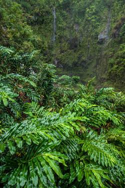 Maui_056.jpg