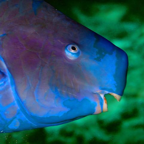 Wildlife & Underwater