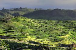 Maui_077.jpg