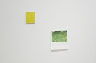 Winnie Pun, yellow shadow (2018), algae bloom (2018)