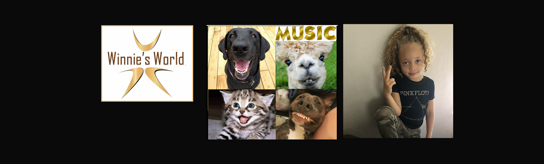 Music and Dogs Cat Lama 2.png