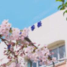 403753_s_wiさくらの木と学校.jpg