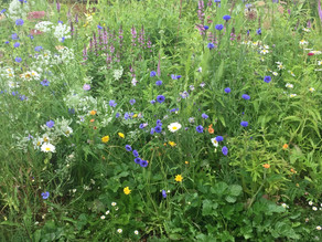 Our own home-grown Hampstead wildflowers!