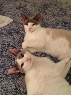 OLIVER & GATSBY
