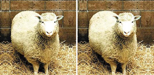 dolly_cloned_sheep.jpg