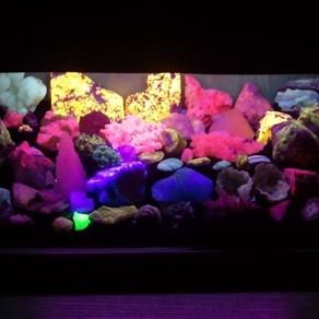 I Minerali Fluorescenti